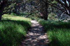 путь красотки Стоковое Фото