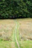 путь к древесинам стоковое изображение rf