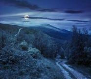 Путь к лесу в горах на ноче Стоковые Фотографии RF
