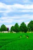 Путь к кладбищу Стоковые Изображения RF