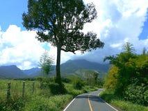 Путь к природе Стоковое Фото