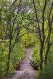 Путь к растительности Стоковые Фотографии RF
