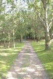 Путь к древесинам Стоковая Фотография