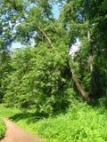 Путь к саду eden Стоковые Фото