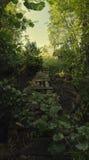 Путь к хате Стоковая Фотография RF