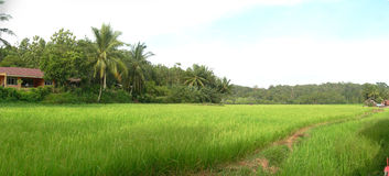 Путь к ricefields Стоковые Изображения