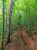 Путь леса весны стоковые фото