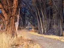 Путь леса в зиме стоковые фото