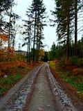 Путь леса в осени стоковые фото