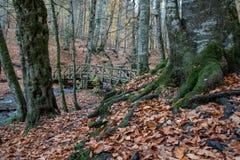 Путь леса в осени стоковое изображение rf