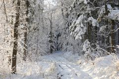 Путь леса в пейзаже зимы стоковая фотография rf
