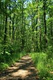 Путь леса дуба Стоковые Фото