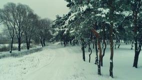 Путь леса зимы видеоматериал