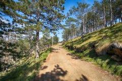 Путь леса на горе стоковая фотография