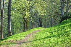 Путь леса предусматриванный в интенсивном зеленом цвете весны стоковое изображение