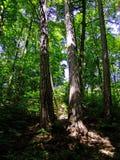 Путь леса среди деревьев летом стоковое фото