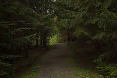 Путь леса, Boserc Стоковое Фото