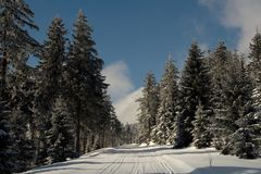 Путь леса Snowy Стоковая Фотография RF