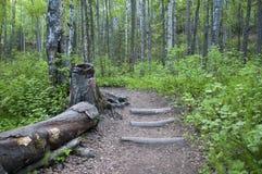 путь лесистый Стоковое Изображение RF