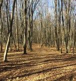 Путь листьев через лес осени с заплатой голубого неба стоковая фотография rf