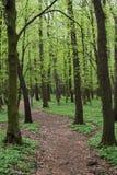 Путь майны в зеленом лесе весны стоковое фото