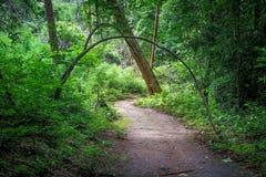 Путь майны дорожки в лесе Стоковая Фотография RF