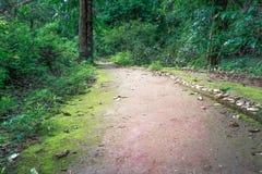 Путь майны дорожки в лесе Стоковые Фото