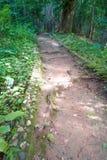 Путь майны дорожки в лесе Стоковые Фотографии RF