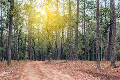 Путь майны дорожки с зелеными деревьями в переулке леса красивом внутри Стоковая Фотография