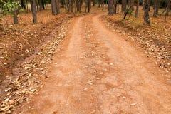 Путь майны дорожки с зелеными деревьями в переулке леса красивом внутри Стоковое Изображение