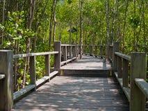 путь мангровы Стоковая Фотография