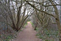 Путь между деревьями Стоковая Фотография RF