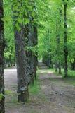 Путь между деревьями Стоковая Фотография