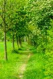 Путь между линией деревьев Стоковая Фотография