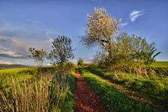 Путь между полями Стоковая Фотография
