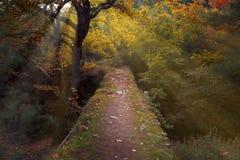 Путь моста в древесинах Стоковое Изображение RF