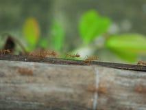 Путь муравьев стоковые фото