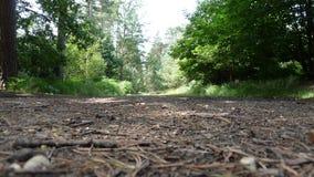 Путь на прогулке леса Стоковые Изображения