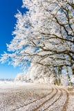 Путь на снежном поле под замороженными ветвями Стоковая Фотография RF