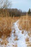 Путь ноги Snowy однако поле стоковая фотография