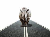 Путь носорога Стоковые Фото