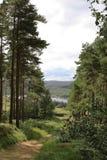 Путь около виска друидов, северный Йоркшир Стоковое Фото
