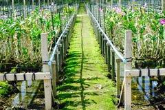 Путь орхидеи Стоковые Изображения RF