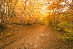Путь осени в пуще Стоковое Изображение RF