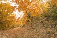 Путь осени в пуще Стоковая Фотография RF