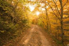Путь осени в пуще Стоковое Фото