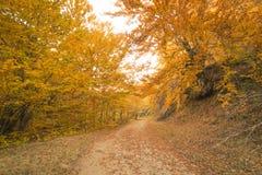 Путь осени в пуще Стоковые Изображения