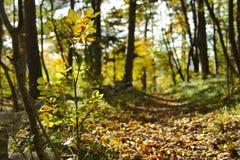Путь осени в солнце леса сильном Стоковая Фотография