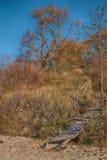 Путь осени через дюны Стоковые Фото
