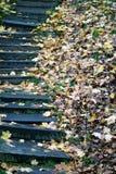 Путь осени Стоковое Изображение RF